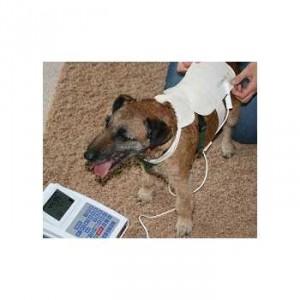 Bioresonantie Stofdetector Kleine honden